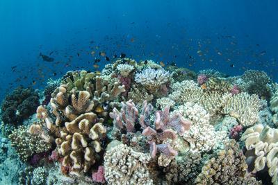 Coral Reef Diversity, Fiji