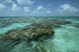 Coral Reef, Lighthouse Reef, Atoll, Belize by Pete Oxford