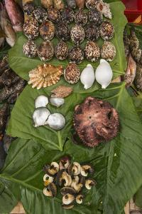 Coral Reef Species, Suva Sea Food Market, Suva, Viti Levu, Fiji by Pete Oxford
