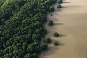 Mangroves. Georgetown Area, Guyana by Pete Oxford