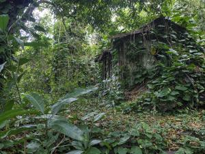 An Abandoned Taro Farmer's Shack in a Lush Rain Forest on Molokai by Pete Ryan