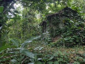 An Abandoned Taro Farmer's Shack in a Lush Rain Forest on Molokai by Pete Ryan