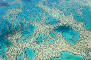 Aerial View of the Great Barrier Reef, Queensland, Australia by Peter Adams