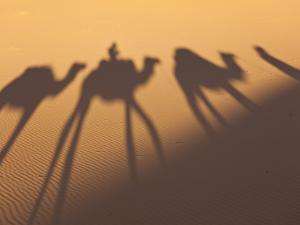 Camel Train Shadows, Erg Chebbi, Sahara Desert, Morocco by Peter Adams