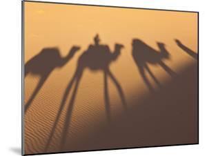 Camel Train Shadows, Erg Chebbi, Sahara Desert, Morocco by Peter Adams