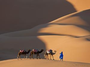 Camels and Dunes, Erg Chebbi, Sahara Desert, Morocco by Peter Adams