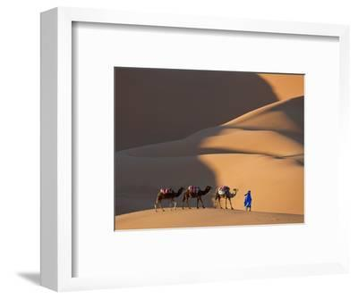 Camels and Dunes, Erg Chebbi, Sahara Desert, Morocco