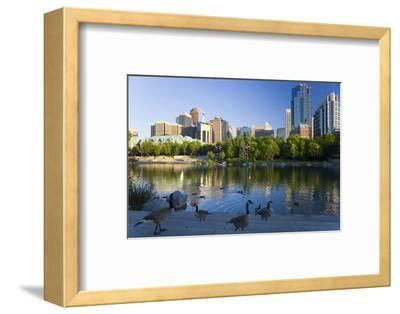 Canada Geese Resting at a Lake with Skyline, Calgary, Alberta, Canada