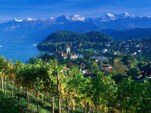 Castle and Vines, Spiez, Switzerland by Peter Adams