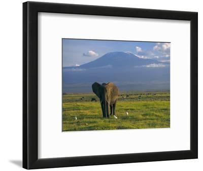 Elephant, Mt. Kilimanjaro, Masai Mara National Park, Kenya