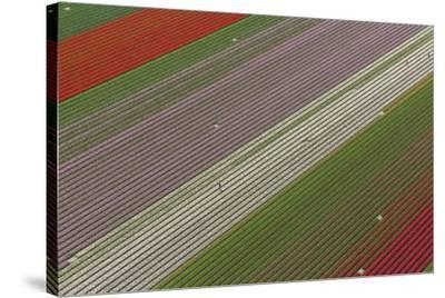 Fields of Colour I