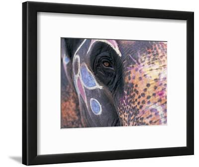 Goa, India, Close-up of Elephants Eye
