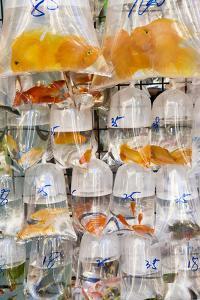 Goldfish at Goldfish Market, Hong Kong, China by Peter Adams