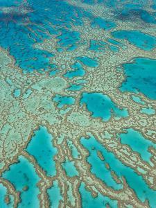 Great Barrier Reef, Queensland, Australia by Peter Adams