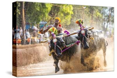 Kambala, Traditional Buffalo Racing, Kerala, India
