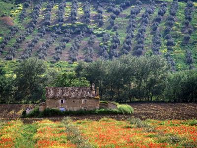 Landscape of Andalucia, Spain