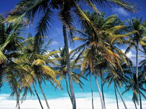 Palm Trees and Beach, Barbados, Caribeean by Peter Adams