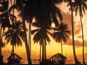 Palm Trees at Sunset, Zanzibar, Tanzania by Peter Adams