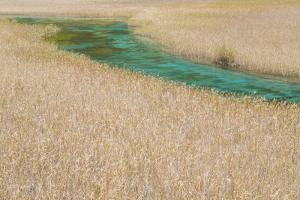 River, Reed Lake, Jiuzhaigou National Park, Sichuan, China by Peter Adams