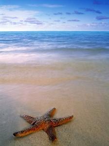 Starfish on Beach, Maldives by Peter Adams