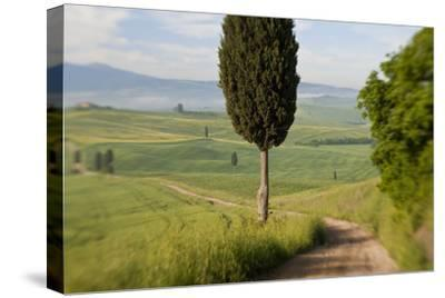 Track, San Quirico d'Orcia, Val d'Orcia, Tuscany, Italy