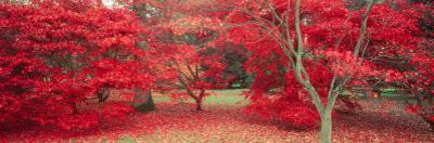 Trees in Fall, Gloucestershire, UK by Peter Adams