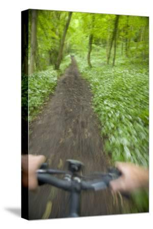 View from Bicycle Along Wooded Track, Uley, Gloucestershire, England