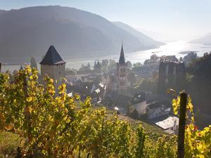View on Bacharach with Peters Church and River Rhine, Rhineland-Palatinate, Germany by Peter Adams