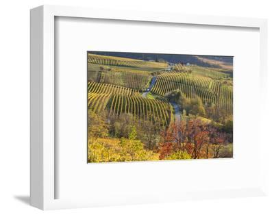 Vineyards, Near Alba, Langhe, Piedmont, Italy
