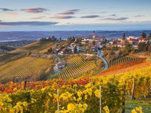 Vineyards, Treiso, Nr Alba, Langhe, Piedmont (or Piemonte or Piedmonte), Italy by Peter Adams