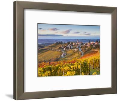 Vineyards, Treiso, Nr Alba, Langhe, Piedmont (or Piemonte or Piedmonte), Italy