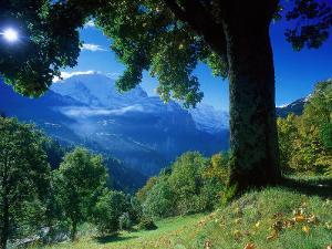 Wengwald, Switzerland by Peter Adams