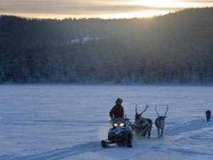 Winter Landscape, Reindeer and Snowmobile, Jokkmokk, Sweden by Peter Adams