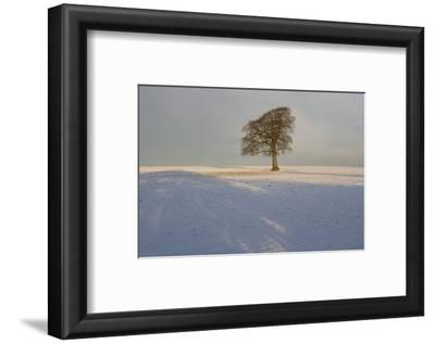 Winter Tree, Gloucestershire, England, UK