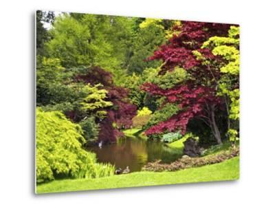 Acer Trees and Pond in Sunshine, Gardens of Villa Melzi, Bellagio, Lake Como, Lombardy, Italy