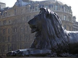Bronze Lion Statue by Sir Edwin Landseer, Trafalgar Square, London, England, United Kingdom, Europe by Peter Barritt