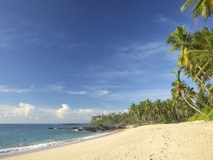 View of the Unspoilt Beach at Palm Paradise Cabanas, Tangalle, South Coast, Sri Lanka, Asia by Peter Barritt