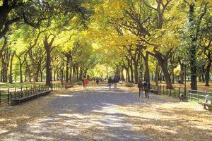 The Mall, Central Park, Manhattan, New York, USA by Peter Bennett