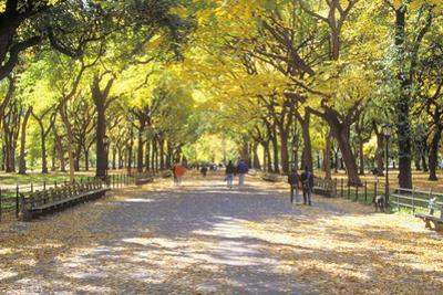 The Mall, Central Park, Manhattan, New York, USA by Peter Bennett