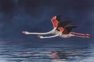 Flying Flamingos by Peter Blackwell