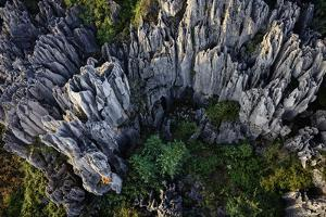 A Climber Ascends Eroded and Dissolved Limestone in the Stone Forest by Peter Carsten