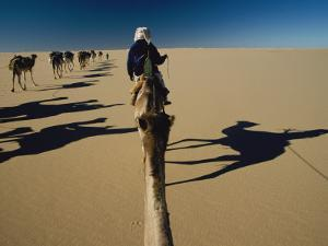 Camel caravan and their shadows crossing the Desert of Marzuq by Peter Carsten