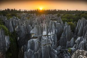 Eroded and Dissolved Limestone in the Stone Forest by Peter Carsten