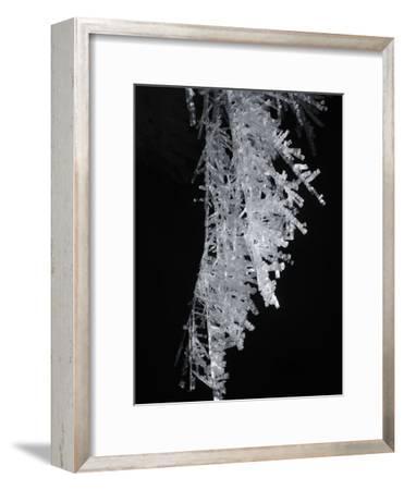 Fragile Ice Crystals Hang in Warren Cave