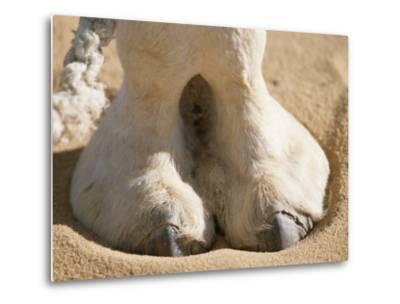 The Photographer Zeroes in on a Dromedary Camels Hoof in the Sahara