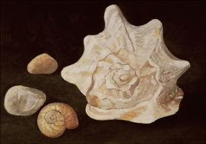 Conch Shell, 1995 by Peter Davidson