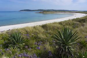 Beach on Tresco Island, Scilly Isles, United Kingdom, Europe by Peter Groenendijk