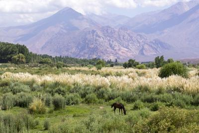 Landscape in the Andes, Argentina by Peter Groenendijk