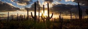 USA, Arizona, Tucson, Saguaro National Park, Tucson Mountain District by Peter Hawkins