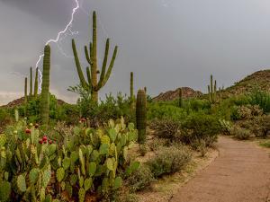 USA, Arizona, Tucson, Saguaro National Park West, Lightning by Peter Hawkins